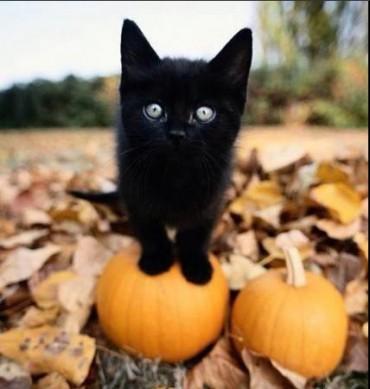 """Сьогодні """"відьомська ніч"""" – Хелловін"""