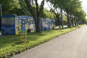 У Тернополі лікують саджанці дерев від бурої плямистості