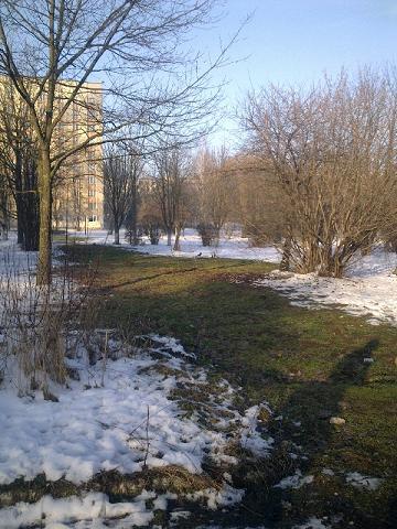 Мер Тернополя взявся не за підігрів тротуарів, а клумб