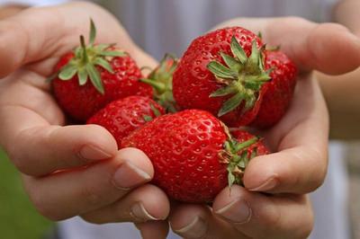 Полуниця і виноград в Україні будуть дорогими через те, що померзло половину плантацій
