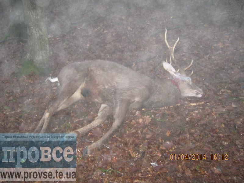 Поки тернополяни відпочивають – браконьєри полюють