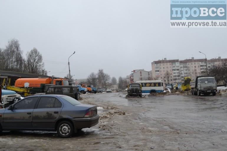 Як прибиральники Тернополя пустили у курник лисиць