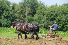 Гектар землі в Україні буде коштувати 5 тисяч доларів