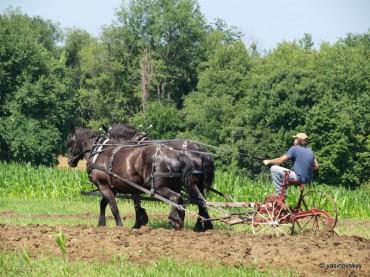 Українське фермерство може зникнути, як явище, вже через рік
