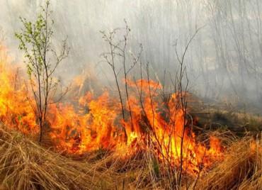 Спалювання рослинності та її залишків суворо збороняється законом!