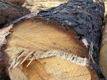 """Тернопільські лісники розказали всю правду про давання """"данини"""" своєму керівництву"""