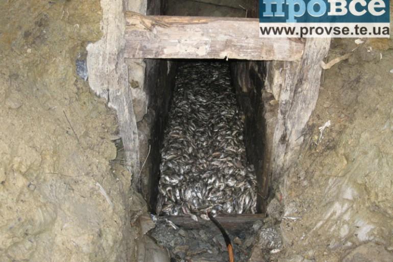 У селі Іванівка вбили риби на пів мільйона гривень!
