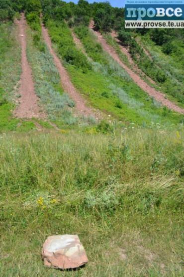 Лісники Бучача незаконно нарубали дров на 60 тисяч