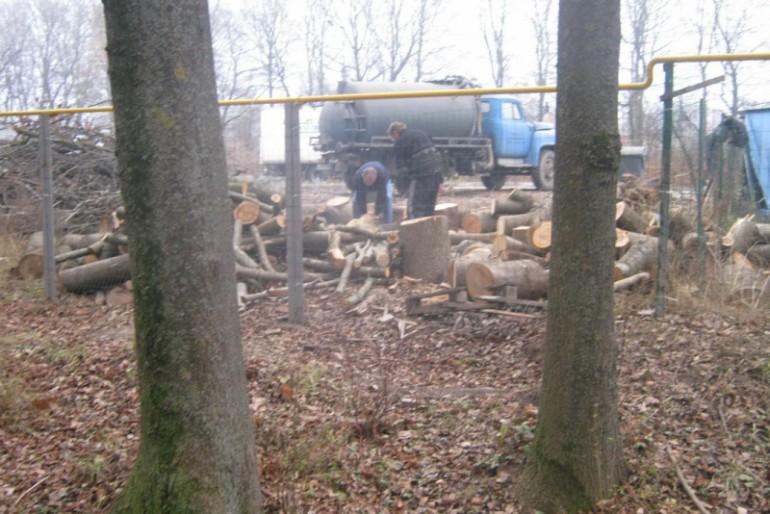 У Тернополі вирубують на дрова парк Національного Відродження (фото)