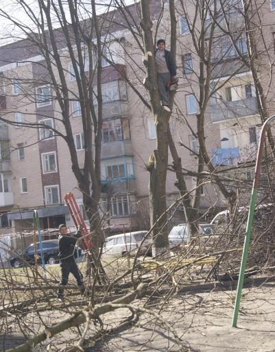 Каліцтво дерев на вулиці Галицька, 35 справа рук ЖЕКу