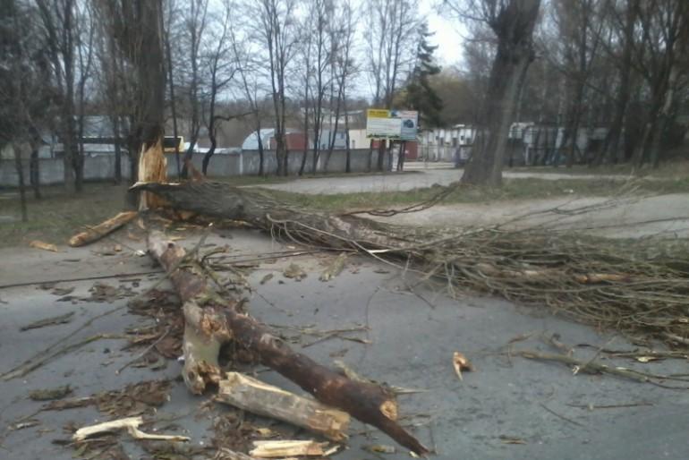 Буревій поламав дерево на вулиці Текстильній (фото)