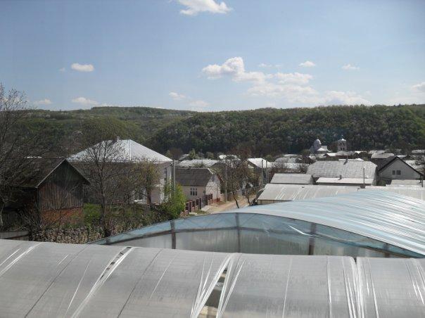 Села Горошову і Шупарку у Борщівському районі називають столицями ранньої городини