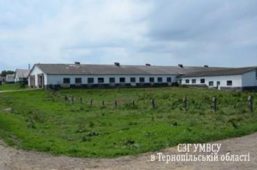 На Тернопільщині правоохоронці затримали серійного крадія худоби