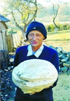 На Тернопільщині знайшли гриба вагою 2 кілограми