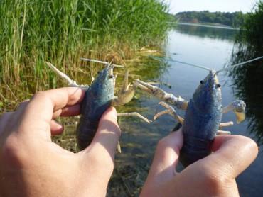 На Тернопільщині заборонили ловлю раків аж до 30 червня 2017 року