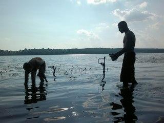 У Шимківцях аграрії потруїли рибу, бо мили в ставку техніку від отрутохімікатів