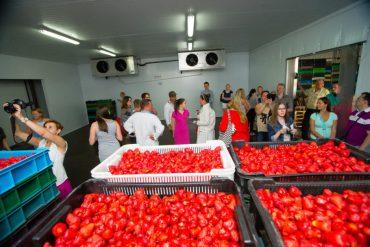 Від вирощування полуниці до відродження українського села
