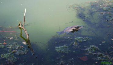 Велике щорічне гниття річок і озер починається
