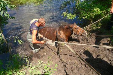 У селі Футори Зборівського району у річку потрапив кінь і не міг вибратись на сушу