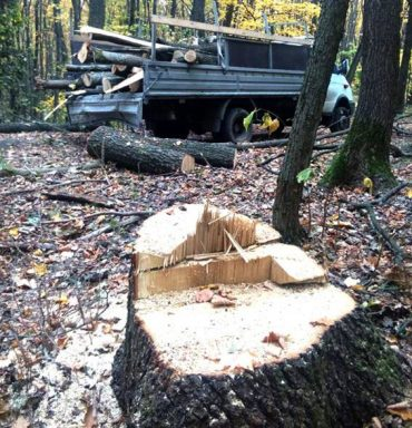 Ну Гусятинщині браконьєри нарубали лісу на 60 тисяч гривень