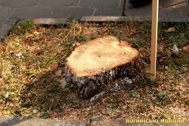 На Зборівщині нарубали дров на пів мільйона