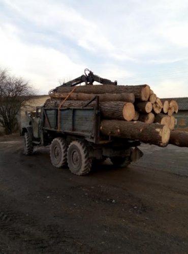 Розкрадання лісу викрило СБУ на Тернопільщині