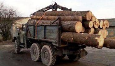 Затриманий СБУ ліс не належав кременецькому лісгоспу