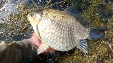 1 квітня розпочинається період весняно-літньої заборони на вилов риби у Тернопільській області