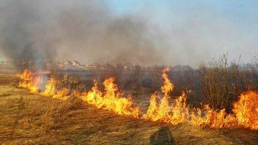 Тернопільщина у вогні та диму: не зважаючи на заборону та небезпеку люди продовжують спалювати суху траву