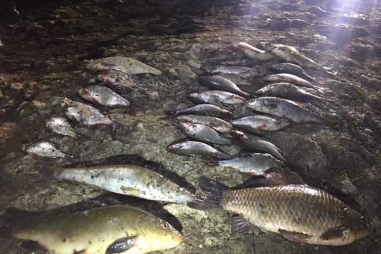 Чергове браконьєрство на тернопільському ставі