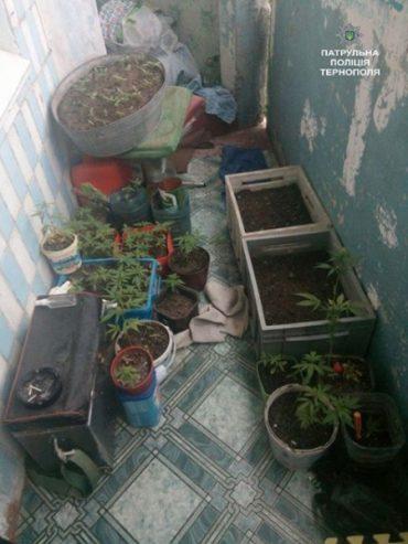 Патрульні виявили 150 кущів наркотичних рослин канабісу