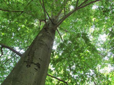 На Тернопільщині виявлено незаконну порубку буків