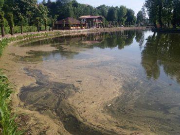 Не встигло у Тернополі потепліти, як вже вода у ставку смердить
