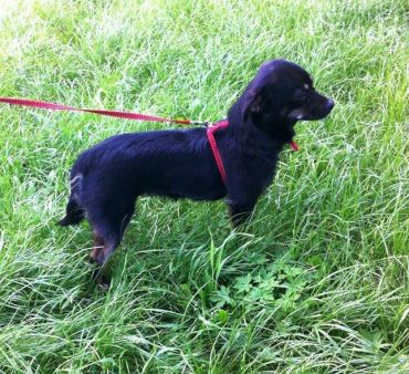 У Тернополі знайшли собачку-метиса чихуахуа