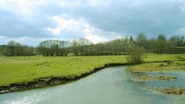 На Шумщині триває слідство за фактом масової загибелі риби