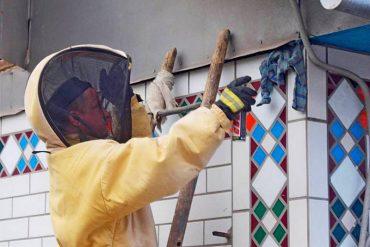 У столиці маланкування на Тернопільщині рятувальники знешкодили кубло шершнів