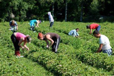 Українка розповіла про особливості заробітків у Польщі