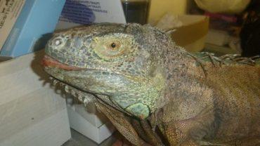"""Як дачницю врятували від """"динозавра"""", який з'їв увесь врожай кабачків та витоптав грядки"""
