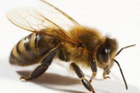 Двоє дітей померло на Тернопільщині: на 3-річного хлопчика впала антресоль, а 7-річного вкусила бджола
