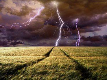 У Буцневі блискавка спалила 24 гектари  ячменю