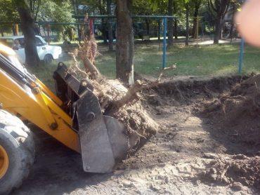Конвеєр нищення природи у Тернополі вражає