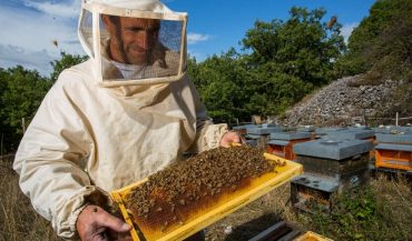 Гіркий присмак українського меду