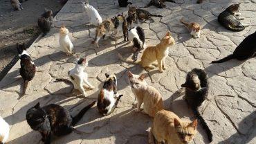 36 котів жили у квартирі на вулиці Дружби в Тернополі
