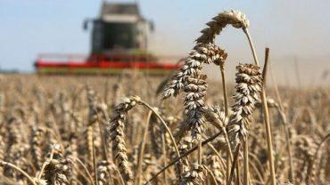 Україна збере другий за обсягом врожай у новітній історії