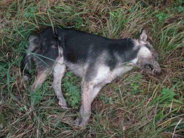 У Петриках сусіди отруїли собаку