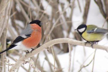 Прийшла зима: народні прикмети на погоду в грудні