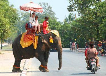 На очах у тернополян слон затоптав туриста