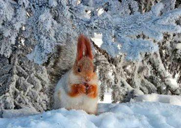 Цікаві прикмети останнього дня зими