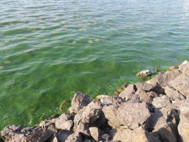 Тернопільське озеро почало знову смердіти