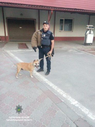 Поліція Тернополя розшукує власника агресивної собаки